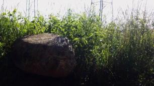 Nature4