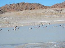 zig tausende Flamingos in den Lagunen