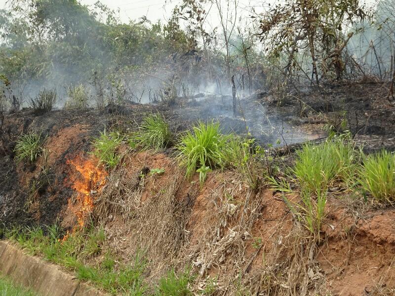 Brandrodungen entlang der Transozeanica im Amazonasgebiet