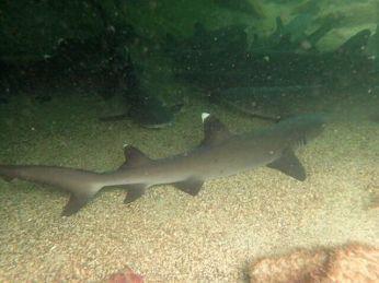 Dachte nicht im Traum daran einem Hai jemals auf 1 Meter nahe zu kommen ...