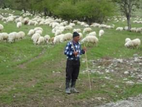 Von Telawi nach Tiflis