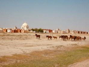 Pferdeherden ... im Hintergrund ein typischer Friedhof