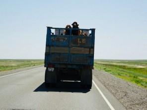 Viehtransport der anderen Art