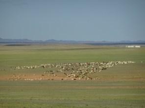 Bei Bajandsag - in der Süd Gobi