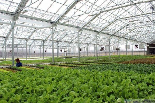 Nhà kính trồng hoa, trồng rau sạch sử dụng tấm lợp lấy sáng bằng nhựa polycarbonate dạng đặc ruột