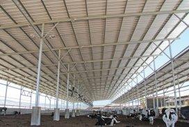 Làm mái cho trang trại nuôi bò - Tôn Kháng Ăn Mòn PVC-A