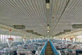 Trang trại nuôi heo thịt - Tôn Kháng Ăn Mòn PVC-A