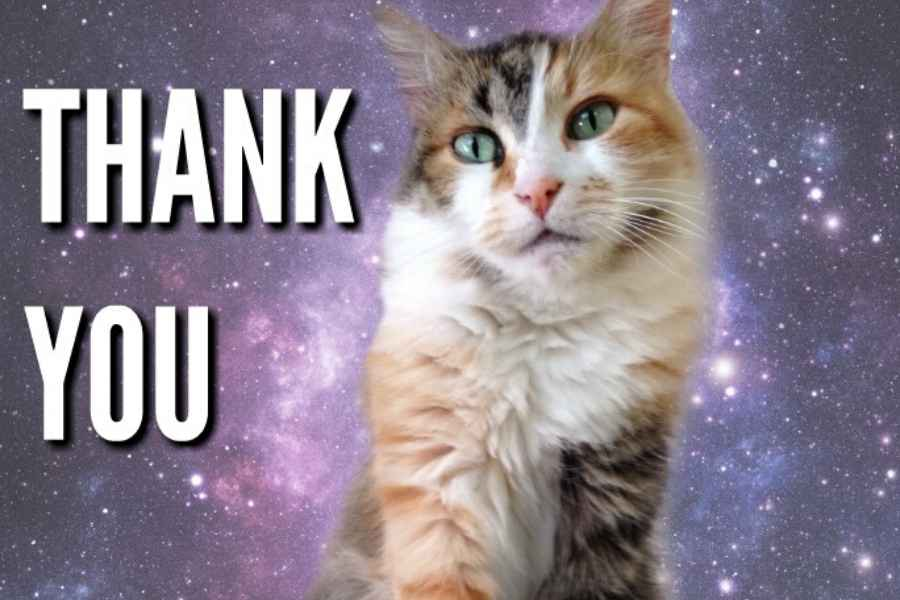 51 Nice Thank You Memes With Cats