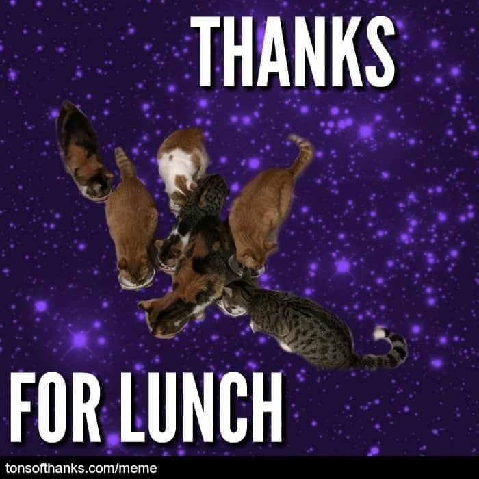 thanks for lunch cat meme