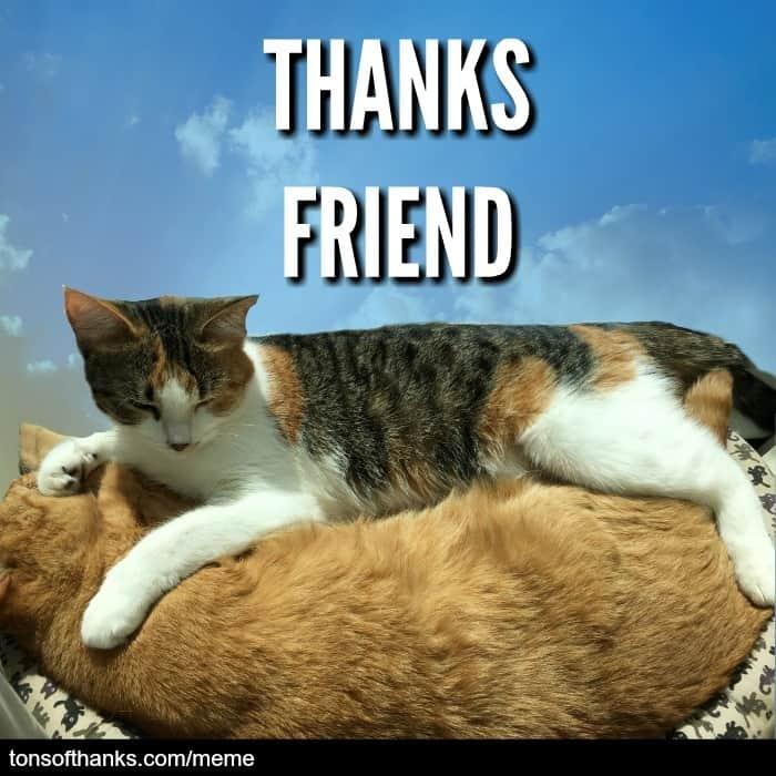 thanks friend cat meme