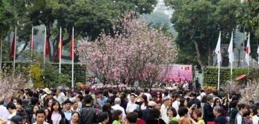 Kéo dài trưng bày hoa anh đào tại Hồ Hoàn Kiếm đến hết 27-3