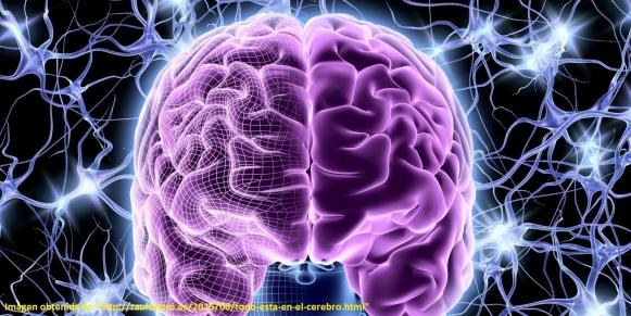 Ten cuidado si consigues un cerebro así de potenciado porque echa chispas.