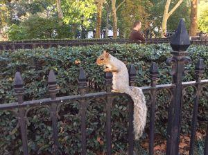 Mis 7 actividades preferidas en NY (Manhattan)