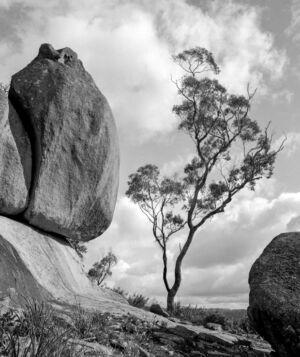 Black Mountain, NSW