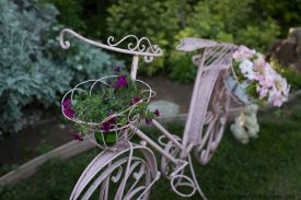 pink antique bike with flower basket