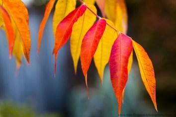 leaves (4 of 18)