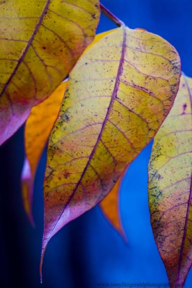 leaves (8 of 18)
