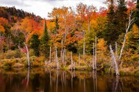 Vermont 2 (9 of 12)