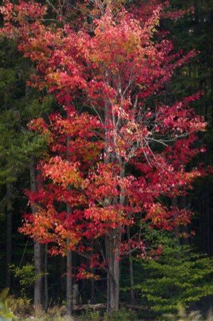 Vermont (4 of 7)