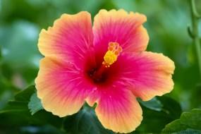 Maui flowers (2 of 3)