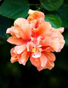 Maui flowers (5 of 12)