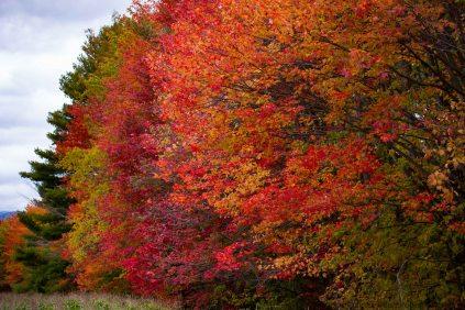 Vermont 2 (3 of 12)