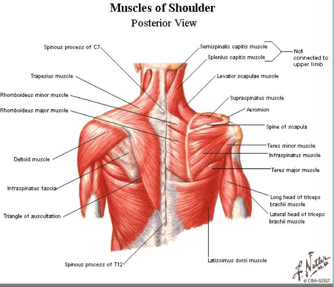 Shoulder Range Motion Degrees