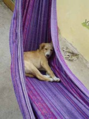 And on the seventh day, we rested… Well, except for Machita – a dog I rescued from a market as a tiny puppy. She rested whenever – and wherever – she could get away with it! I didn't have the heart to disturb her.