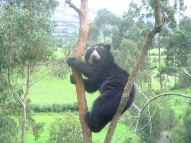 """""""Should that bear be in that tree?"""" """"Um... no, no it shouldn't be..."""""""