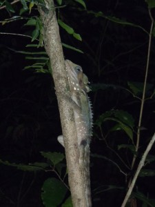Lizard on a tree