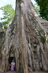 Roo-inside-giant-tree