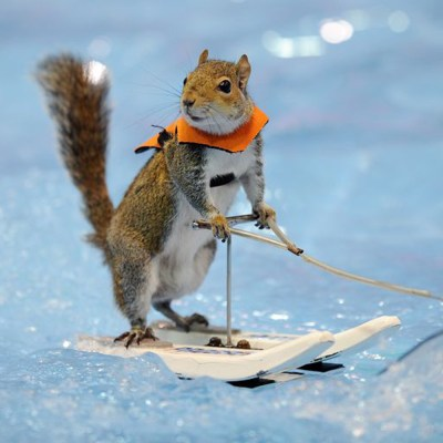 twiggy the water skiing squirrel tribute