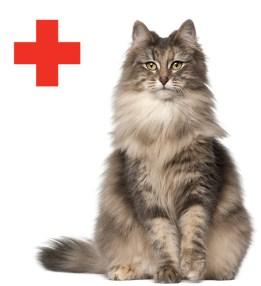 cat_redcross
