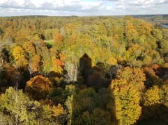 Artistic in Autumn (from top of tower)