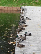 Getting all your ducks in a row ...