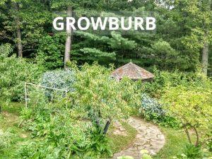 backyard food forest 2019