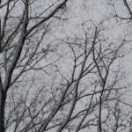 【痛風・結石の合併】入院5(PNL) 〜雪が静かに降る街に ルンバが来たりて笛を吹く
