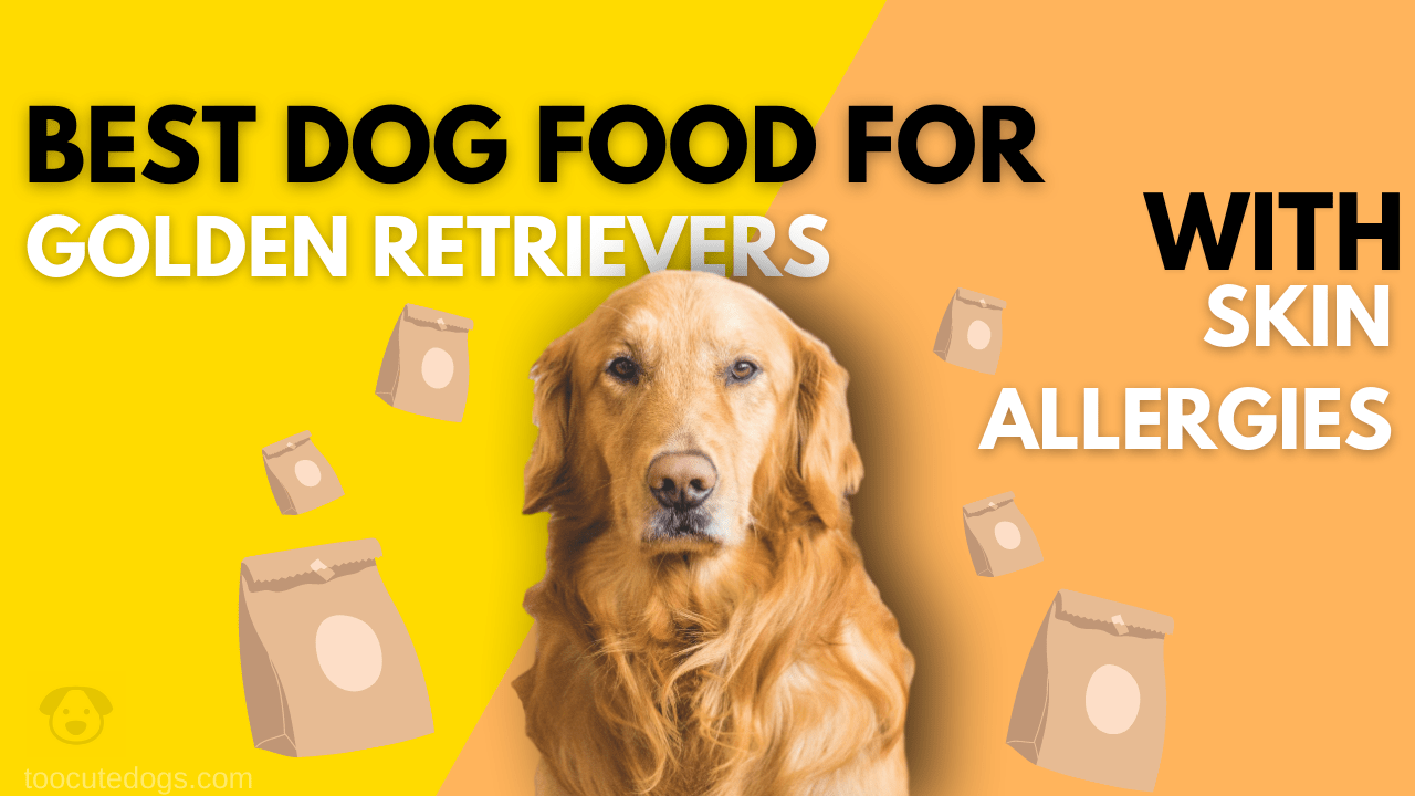 7 Best Dog Food For Golden Retrievers With Skin Allergies