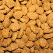 kibble dog food