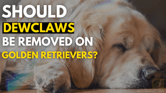 should dewclaws be removed on golden retrievers