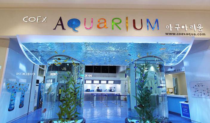 korea-aquarium