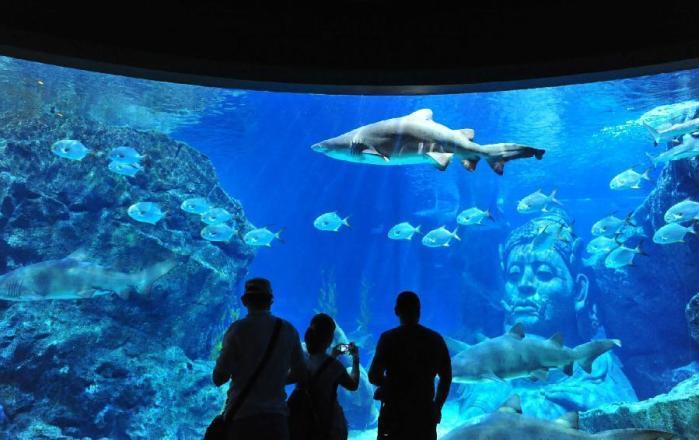 thailand-aquarium-2