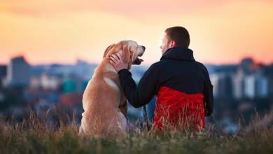 Photo of Benarkah Anjing Akan Membantu Pemilik Mereka Yang Kesusahan?