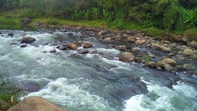 Photo of Kesan Sungai Tercemar Dengan Antibiotik Sangat Merisaukan