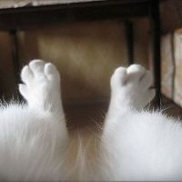 Deep Thoughts On Leg Hair, By Chick E