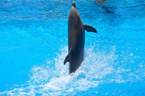 dolphin-1018676_1920