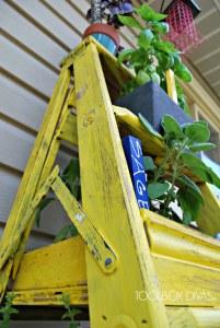 Herb Ladder Garden view from bottom