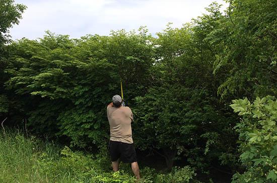 EGO Hedge trimmer tackling large bushes