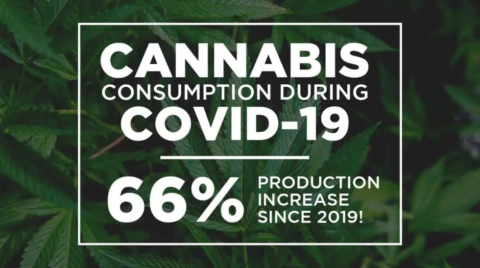 Cannabis consumption during COVID