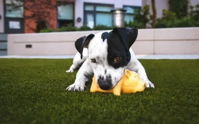 15 Best Cheap Dog Toys For Any Budget and All Dog Sizes